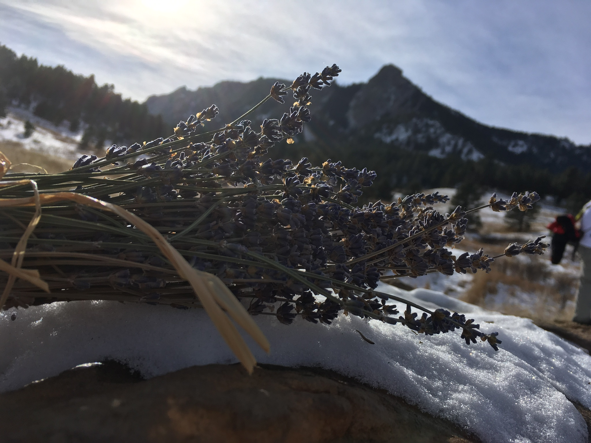 Lavender bundle with mountain in background