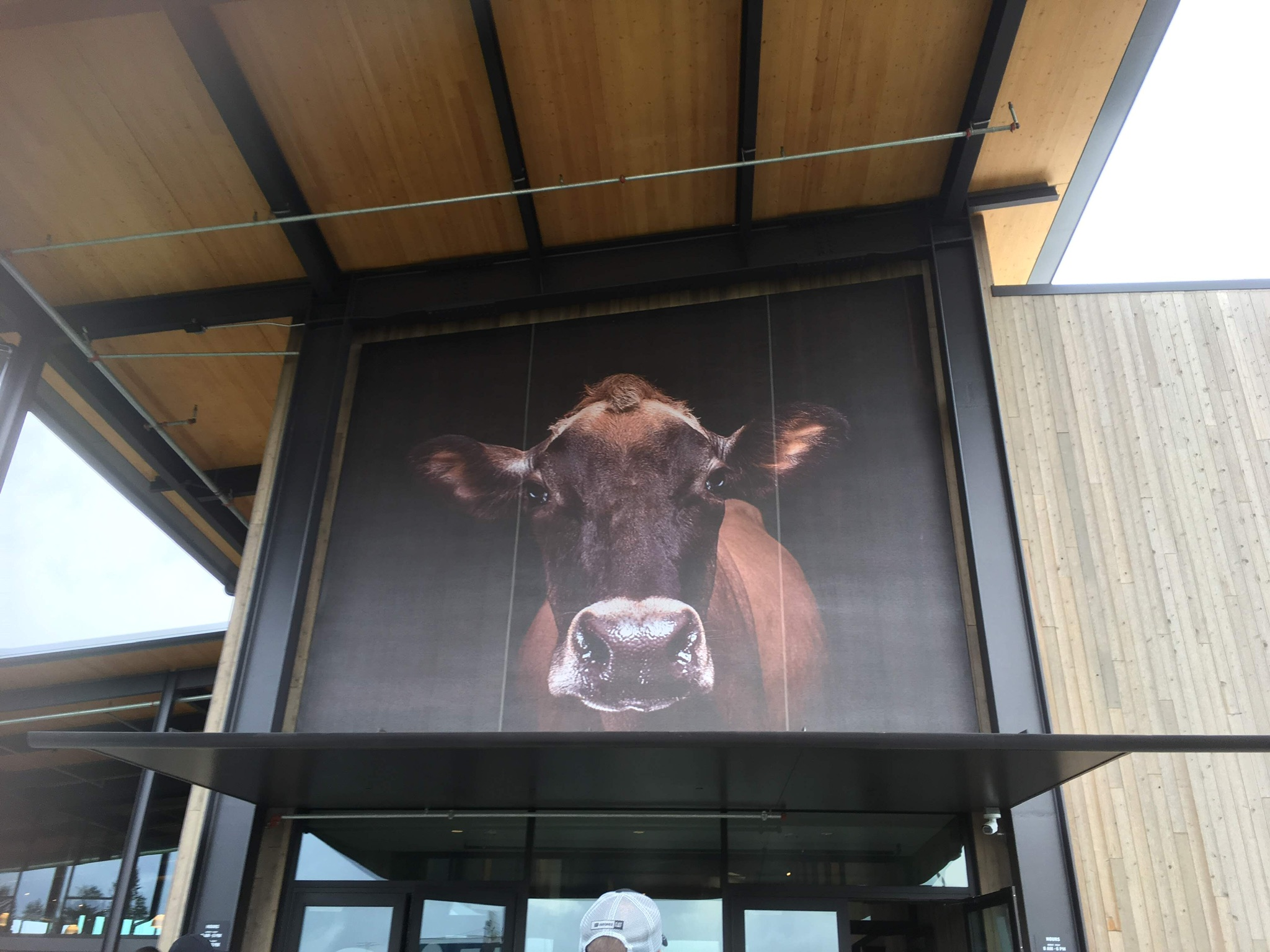 Cow picture on building
