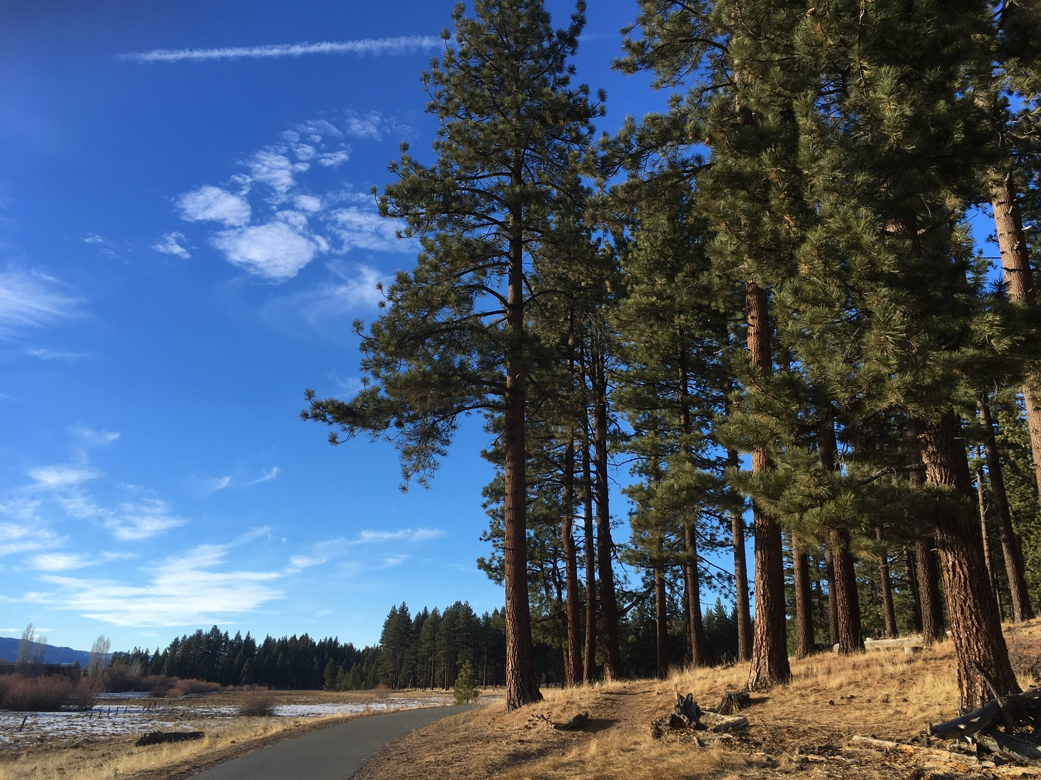 Blue sky and trees in Lake Tahoe