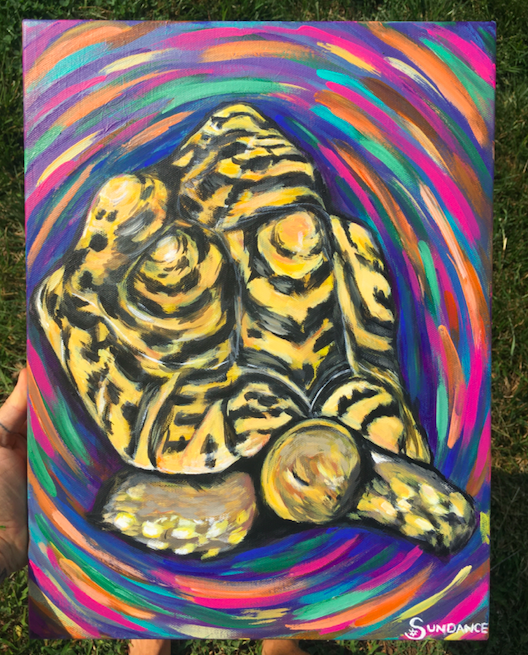 tortoise, turtle, psychedelic, pet portrait, reptile, shell, colorful