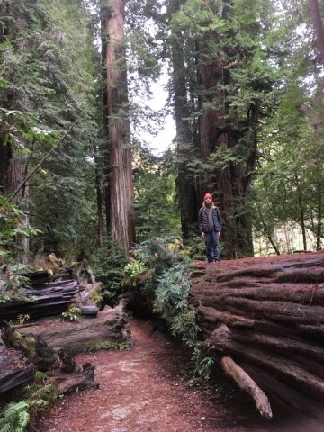 boy on redwood tree in forest