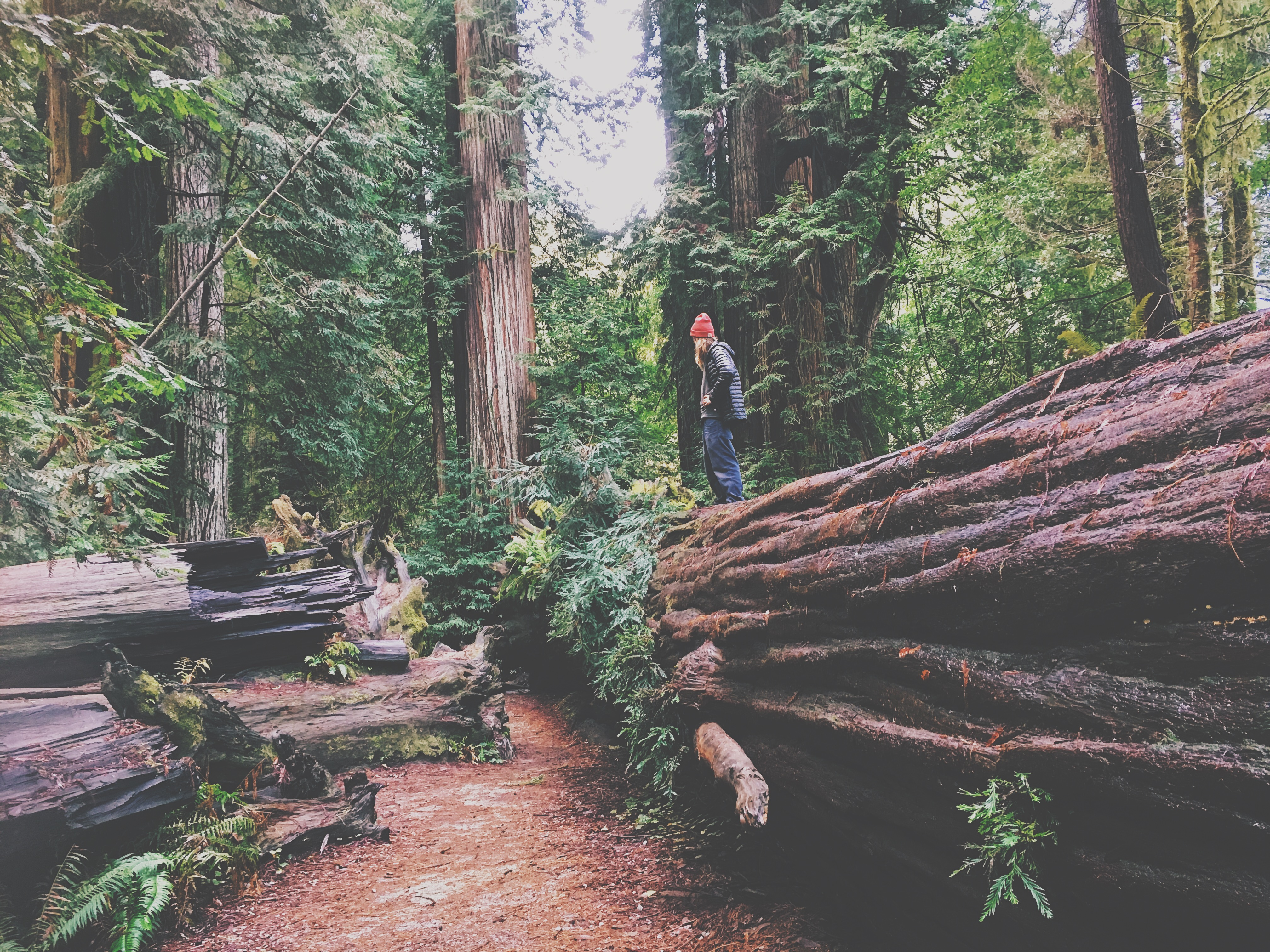 JEDEDIAH SMITH REDWOODS STATE PARK – Car Camping Northern California