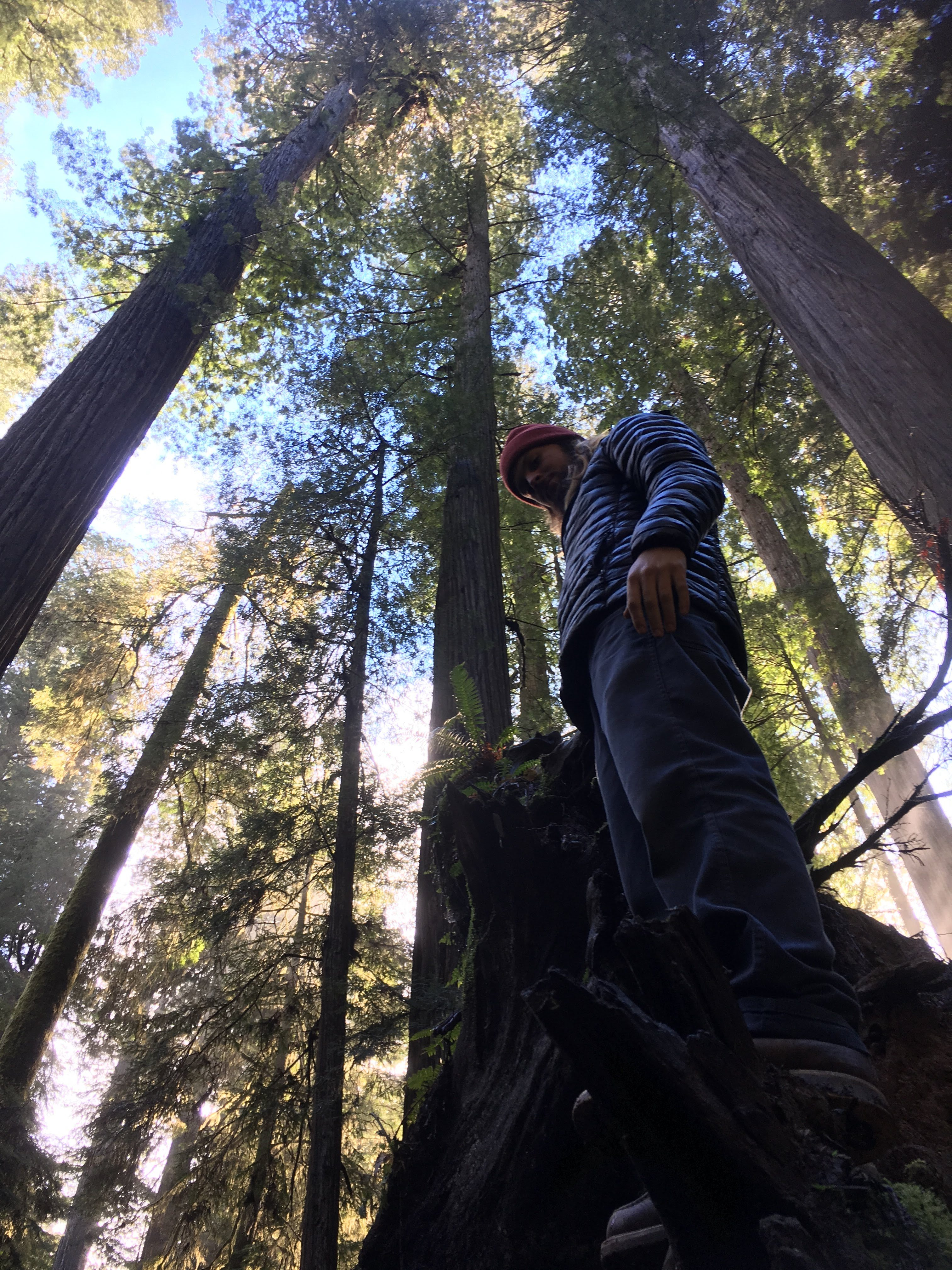 boy and redwood trees