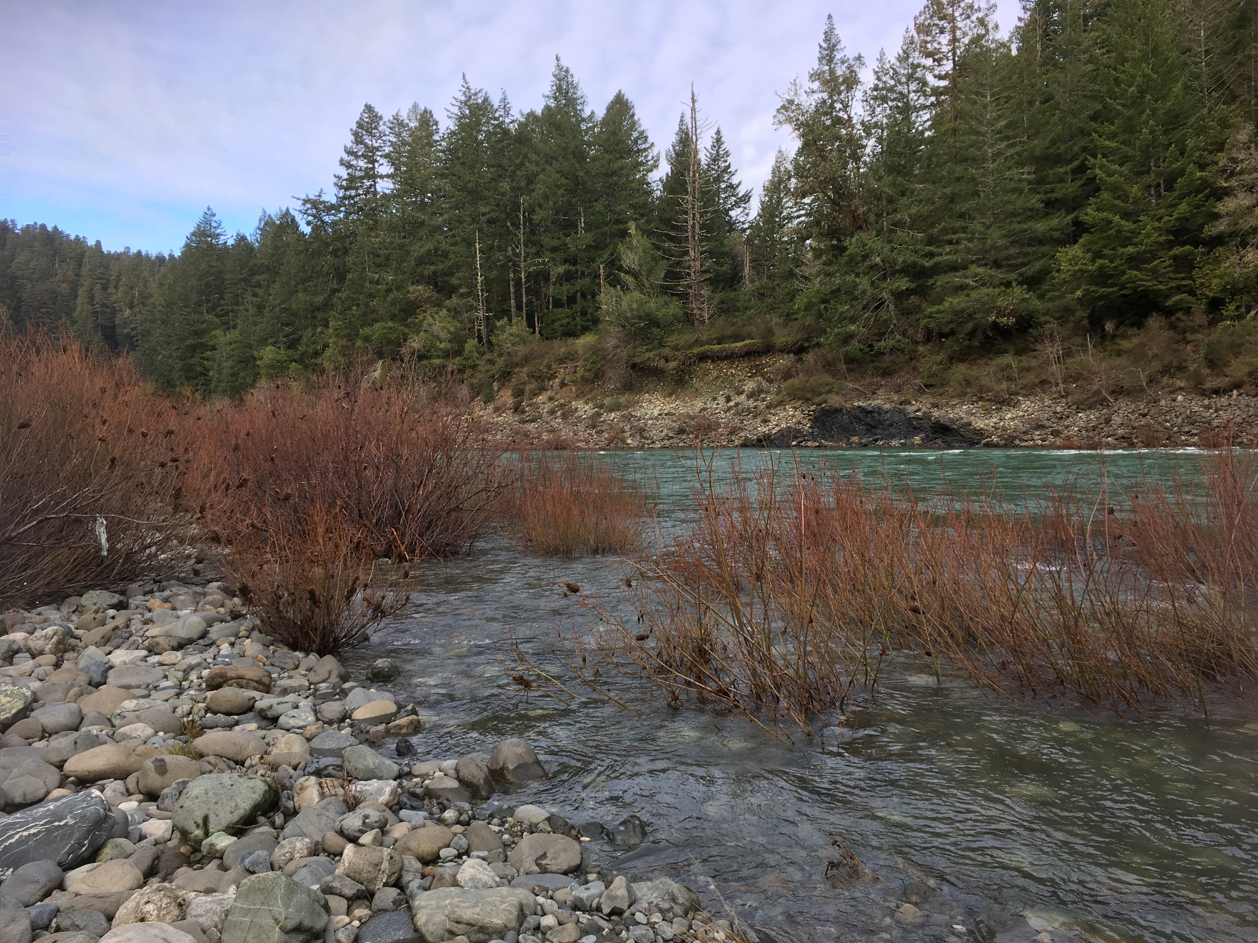 River in redwood forest