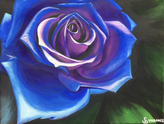 blue purple rose, flower