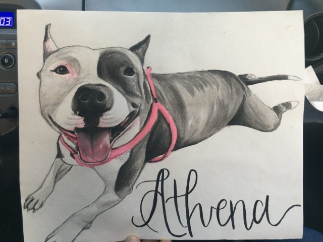 watercolor pet portrait pit bull
