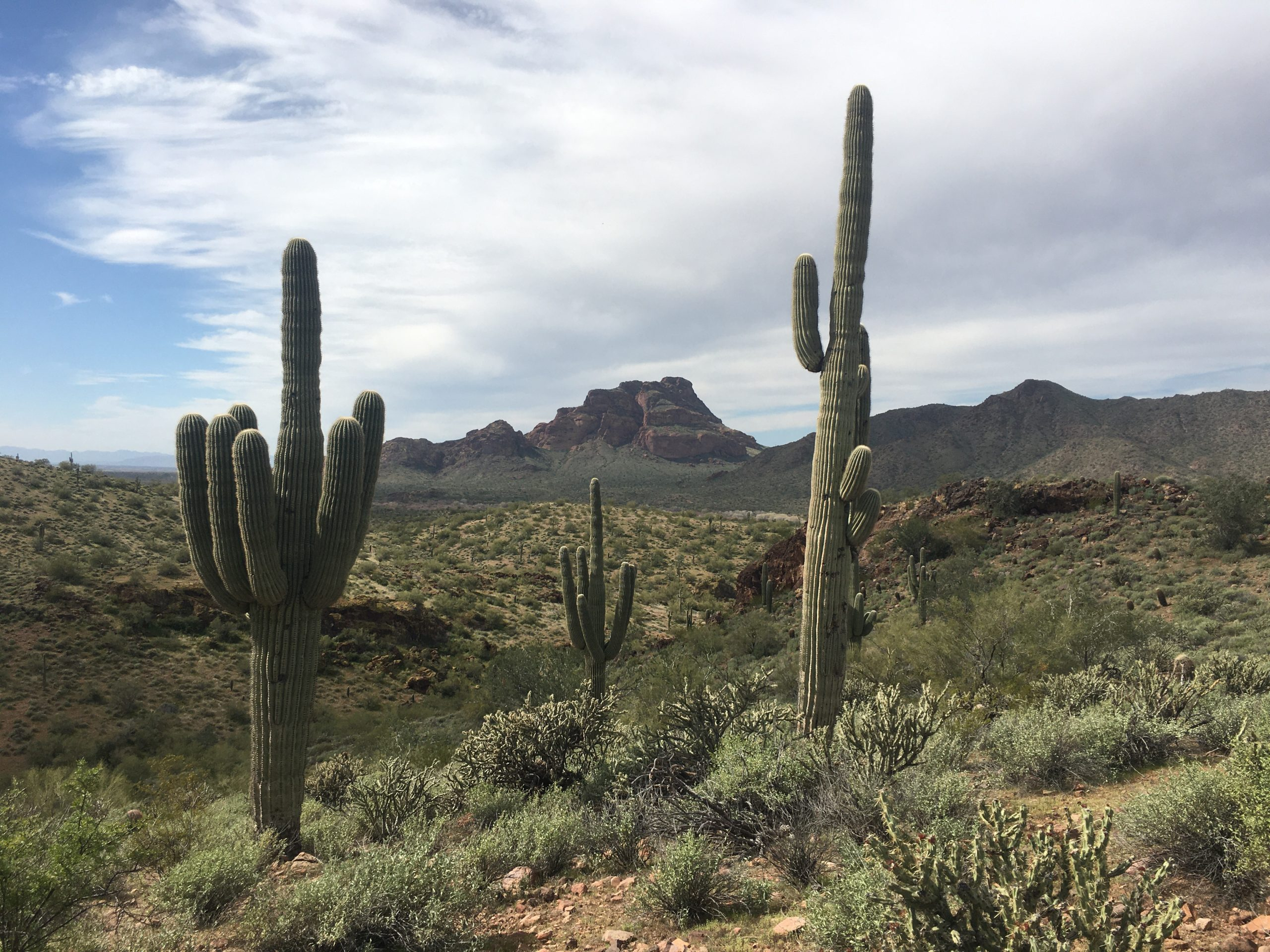 Tonto National Forest views