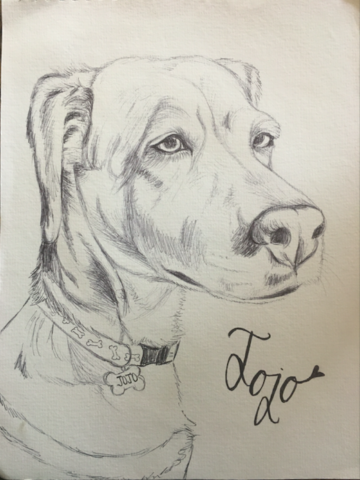 drawing of dog black and white